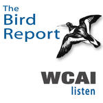 https://mediad.publicbroadcasting.net/p/wcai/files/styles/npr-feeds-podcast-cover-art/public/201610/Bird-Report_Podcast.jpg