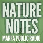 https://marfapublicradio.org/wp-content/themes/vast-milkshake/images/nature-notes.jpg