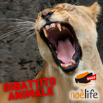 http://www.noelife.it/podcast/images/logo-dibattito-animale.jpg